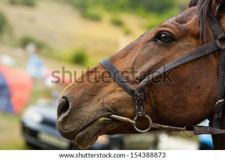 head Horse  - stock photo