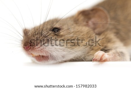 head mouse. macro - stock photo