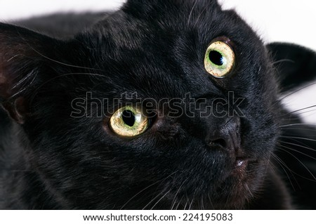 head of a black cat with green eyes close up - stock photo