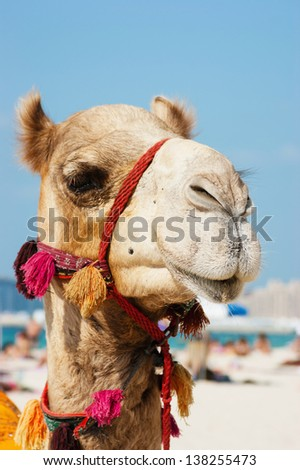 Head of a camel on a background of blue sky - stock photo