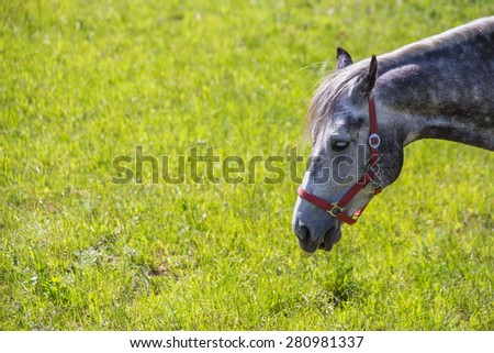 Head of a horse grazing in the meadow - stock photo
