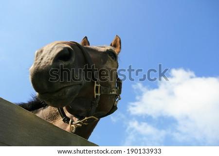 Head of a muddy horse - stock photo
