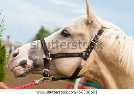 head of a white horse - stock photo
