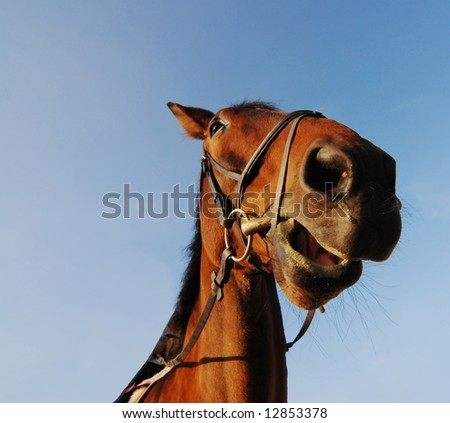 Head of brown horse on blue sky background - stock photo