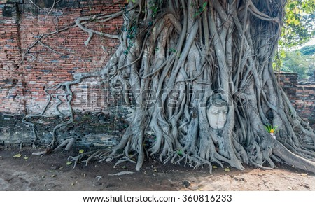 Head of Buddha statue in the tree roots at Wat Mahathat, Ayutthaya, Thailand.Image contain certain grain or noise,sost focus. - stock photo
