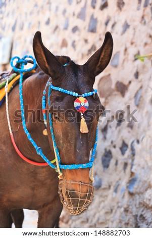 head of donkey from Santorini - stock photo
