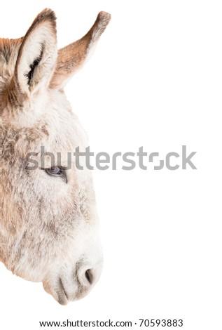 Head of Donkey isolated on white - stock photo