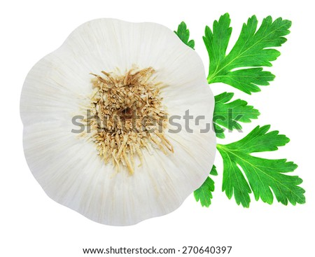 Head of garlic and sprig of fresh green parsley isolated on white background - stock photo