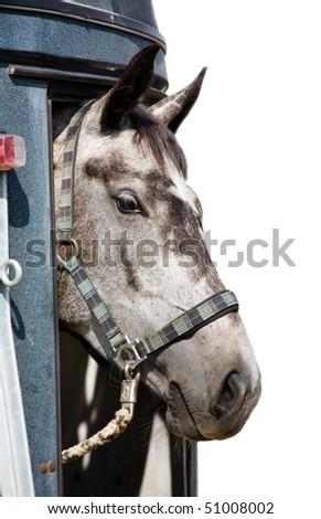 Head of grey horse isolated - stock photo