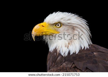 Head of sea eagle isolated on black background - stock photo