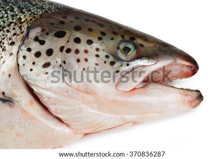Head of the Atlantic salmon - stock photo