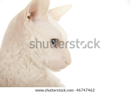 Head of the white cat (close-up) - stock photo