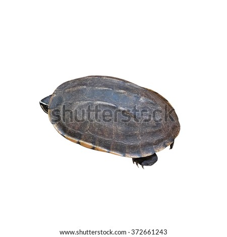 head of turtle (selected focus) with its shell (Isolated mode) - stock photo