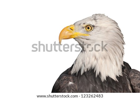 head profile of an american bald eagle isolated on white - stock photo