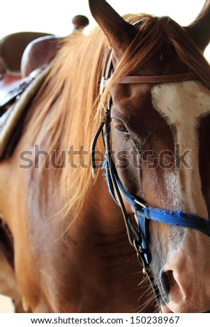Head shot of horses in the field  - stock photo