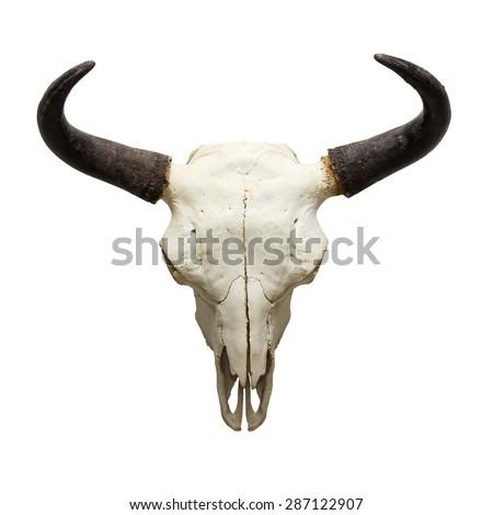 head skull of bull isolated on white background - stock photo