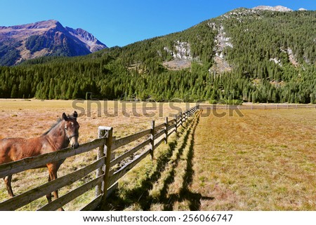 Headwaters National Park Krimml. Rural idyll. Farm fields separated from the dirt road the low fence made of logs. On the shore stands the rustic horse - stock photo