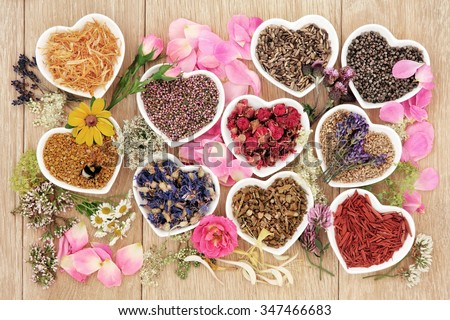 Healing herb and flower selection used in herbal medicine in heart shaped bowls with pollen and honey bee over oak background. - stock photo