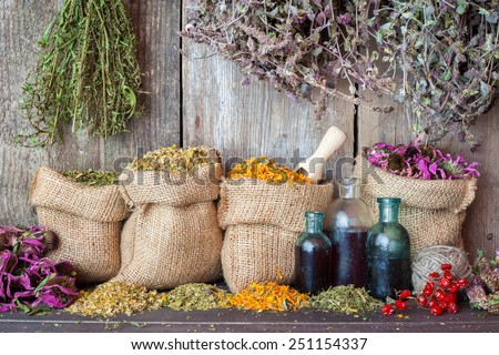 Healing herbs in hessian bags and bottles of essential oil near rustic wooden wall, herbal medicine. - stock photo