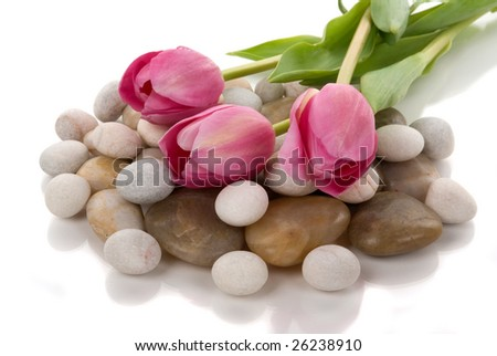 Healing pebbles and tulips - stock photo