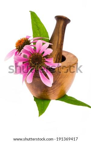healing plants: coneflower (Echinacea purpurea) with wooden mortar - stock photo