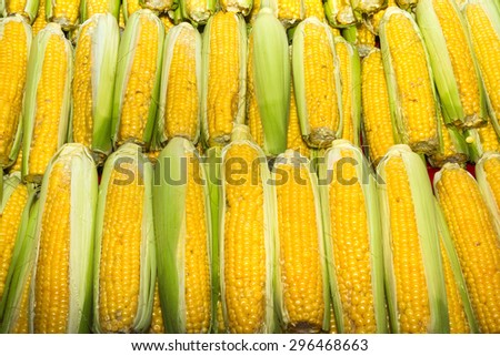 Health booster high protein vegetable freshly harvested corn on an open air fruit market stand. - stock photo