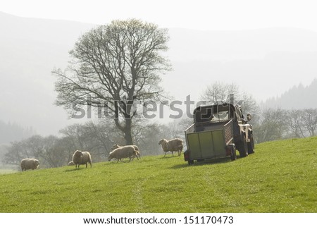 Healthy animal livestock feeding in a lush rural environment. - stock photo