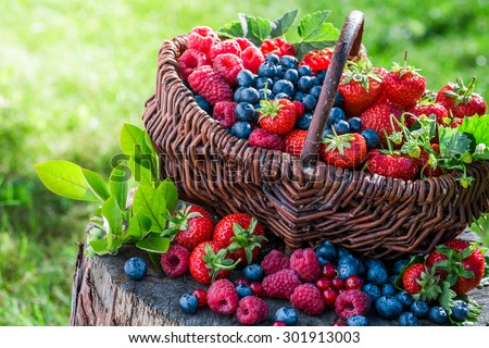 Healthy berries in sunny day - stock photo