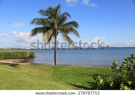 Healthy coconut nut palm tree - stock photo