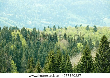 Healthy, colorful coniferous and deciduous forest with old and big trees in desolate wilderness area of a national park. Sustainable industry, ecosystem and healthy environment concepts.  - stock photo