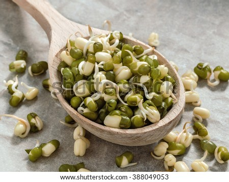 Healthy eating. Sprouted lentils in a wooden spoon - stock photo