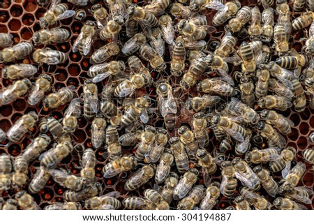 Healthy honey bee frame covered with bees surrounding the queen bee - stock photo
