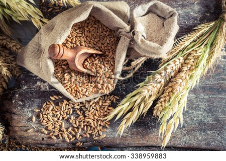 Healthy ingredients for rolls and bread with whole grains - stock photo