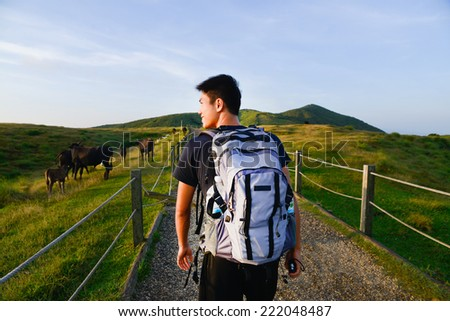 Healthy young man walking with Cows grazing on a green summer meadow  - stock photo