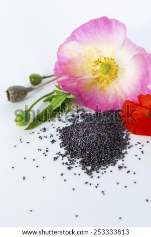 Heap of dry poppy seeds with red and pink poppy flowers, buds and stems on white background - stock photo