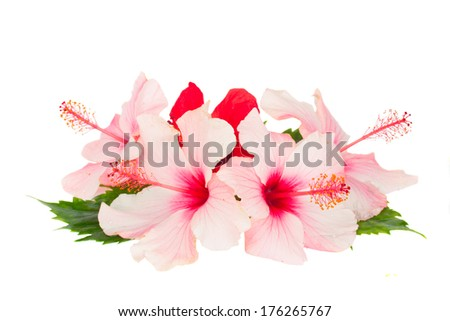 heap of  hibiscus flowesr isolated on white background - stock photo