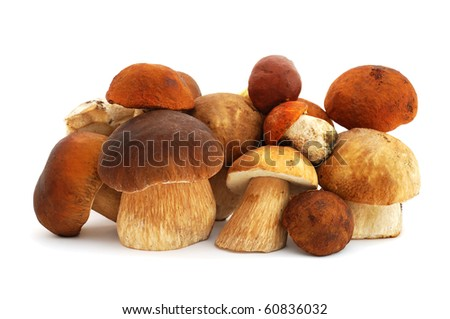 Heap of mushrooms isolated on white background - stock photo