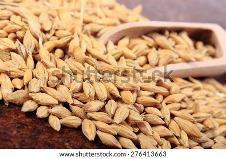 Heap of organic whole barley grain with wooden spoon - stock photo