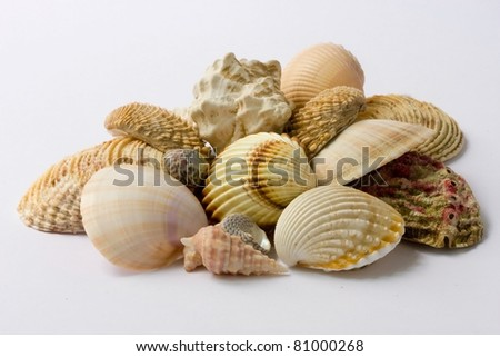 Heap of seashells isolated on a white background - stock photo