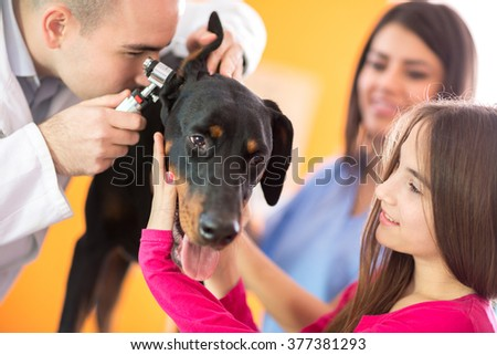 Hearing checkup of Great Done dog by veterinarians in vet infirmary - stock photo