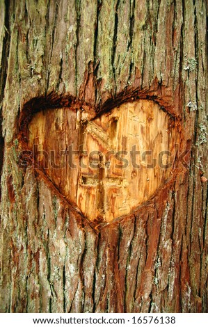 Heart carved in a live tree bark - stock photo