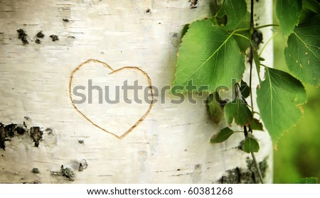 Heart curved on a birch - stock photo