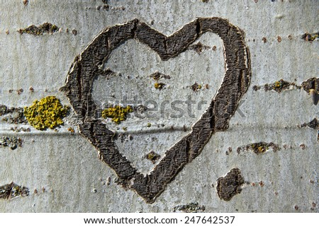 Heart Engraved on the bark of a tree  - stock photo