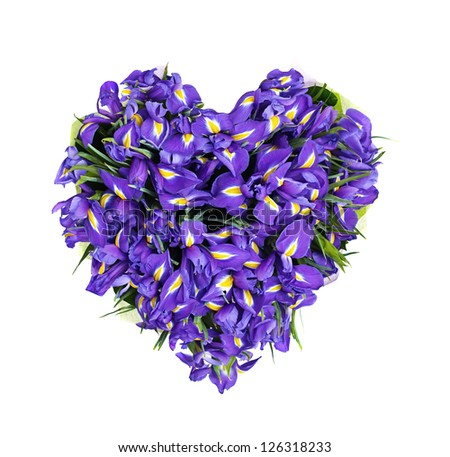 heart from flowers, a bouquet from the irises, isolated, on the white - stock photo