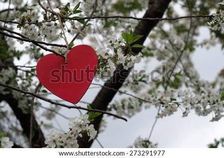 Heart Hanging in Blooming Tree - stock photo