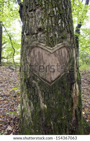 heart in the bark of a tree, Heart wooden cut texture - stock photo