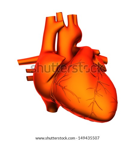Heart - Internal organs isolated on white - stock photo