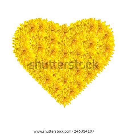 Heart isolated on white created using yellow chrysanthemum flowers - stock photo