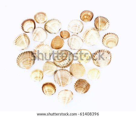 heart made from seashells on white - stock photo