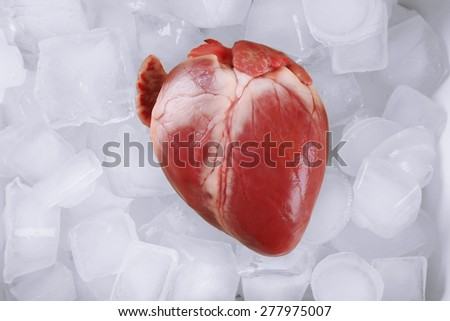 Heart organ with ice close up - stock photo